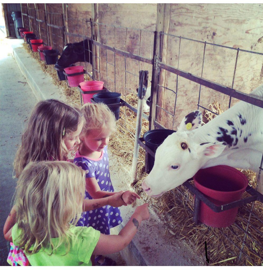 Three girls with calf